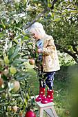 Mädchen in Gummistiefeln auf einer Leiter am Apfelbaum im Garten