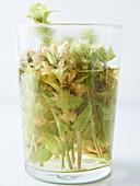 Greek mountain tea, brewed in a glass