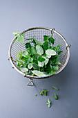 Fresh herb leaves in a sieve