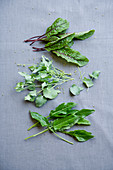 Red-veined dock, French sorrel and common sorrel
