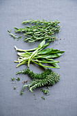 Rosemary, culantro and hanging rosemary