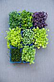 Various microgreens