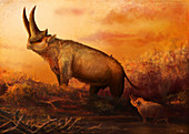 Arsinoitherium prehistoric mammal, illustration