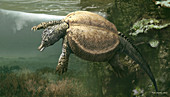 Psephochelys marine reptile, illustration