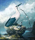 Pelagornis prehistoric bird, illustration