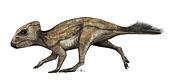Protoceratops juvenile dinosaur, illustration
