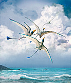 Rhamphorhynchus pterosaurs, illustration