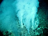 White smoker hydrothermal vents