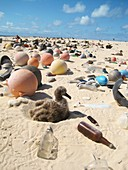 Albatross chick amongst marine debris, Hawaii, USA