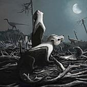Stereognathus, illustration
