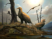 Teratornis prehistoric birds of prey, illustration