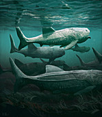 Titanichthys prehistoric fish, illustration