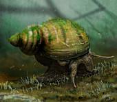 Viviparis freshwater snail, illustration