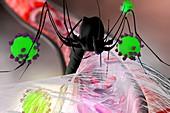 Mosquito disease transmission, conceptual illustration
