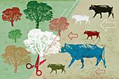 Deforestation for cattle ranching, illustration