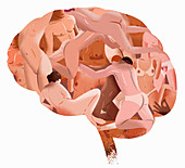 Naked bodies forming brain, illustration