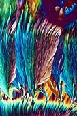 Potash alum and Mohr's salt, polarised light micrograph