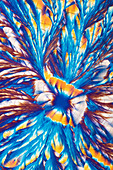 Metal sulphates, polarised light micrograph