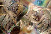 Sugar crystals, polarised light micrograph