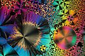 Niacinamide, polarised light micrograph