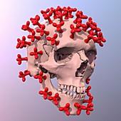 Coronavirus danger, conceptual illustration