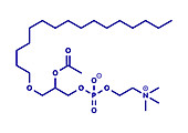Platelet Activating Factor signalling molecule, illustration