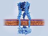 Tumour necrosis factor-alpha and receptor, molecular model
