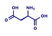 D-aspartic acid amino acid molecule, illustration