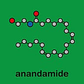 Anandamide endogenous cannabinoid neurotransmitter