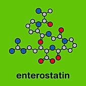 Enterostatin signalling peptide molecule, illustration