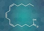 Gamma-linolenic acid molecule, illustration