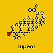 Lupeol molecule, illustration