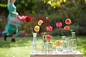 Einzelne Blüten von Dahlien in Vasen