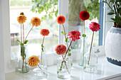 Einzelne Blüten von Dahlien in Vasen am Fenster