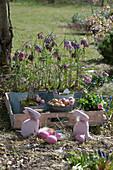 Schachbrettblumen in Blechtöpfen auf Holztablett, Tausendschön, Steckzwiebeln, Osterhasen und Ostereier