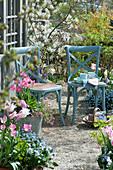 Sitzplatz am Teehaus, Tulpen, Vergißmeinnicht und Felsenbirne