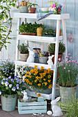 Blumentreppe mit Goldlack, Hornveilchen, Schleifenblume, Vergißmeinnicht 'Myomark', Schnittlauch, Thymian, Oregano und Töpfe mit Utensilien und Sämereien, Osterhasen