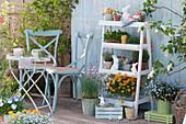 Blumentreppe mit Goldlack, Vergißmeinnicht 'Myomark', Schnittlauch, Jungpflanzen von Tomaten und Kapuzinerkresse, Thymian, Oregano und Töpfe mit Utensilien und Sämereien, kleine Sitzgruppe, Osterhasen