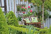 Gartenbank vor blühender Gehölz-Pfingstrose an Trockenmauer