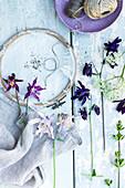 Akelei: Blüten und Samen