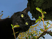 Portrait curious black cat from below