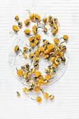 Dried dandelion flowers