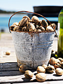 A bucket of freshly gathered clams