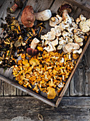 Freshly picked wild mushrooms on a wooden tray