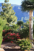Mediterraner Garten mit Palmen, Azaleen und Kiefer