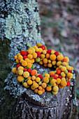 Kranz aus gelben und roten Früchten vom Erdbeerbaum
