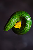 Round curved cucumber with flower against dark background