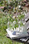 Buschwindröschen in Glasflaschen