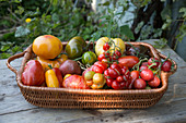 Different types of tomatoes in basket bowl