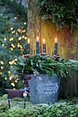 Adventskranz mit Wacholderzweigen und grauen Kerzen im Metalleimer